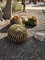 Cactus III.jpg