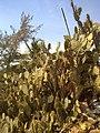 Cactus rocky beach goa (2).jpg