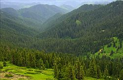 Calapooya Mountains, Umpqua National Forest, Oregon.jpg