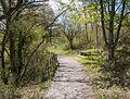 Camino Bosque de Armentia 01.jpg