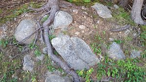 Cape Breton Highlands National Park - Glacial debris on the north side of Freshwater Lake.