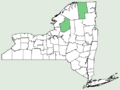 Carex wiegandii NY-dist-map.png