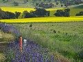 Cargo NSW 2800, Australia - panoramio.jpg