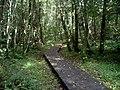 Carr woodland, Caerlaverock - geograph.org.uk - 979561.jpg