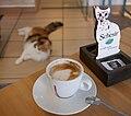 Cat Cafe (Cat Caffe).jpg