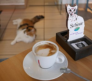Cat Cafe (Cat Caffe).jpg