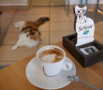 Cat café - Cat cafe in Ljubljana, Slovenia.