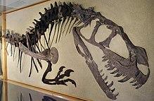 Ceratosaurus - Wikipedia