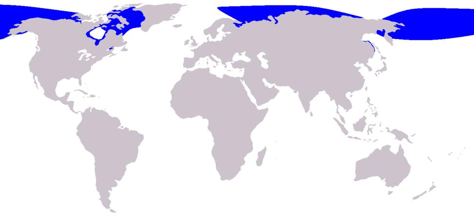 Cetacea range map Beluga
