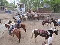 Charreada en El Sabinal, Salto de los Salado, Aguascalientes 29.JPG