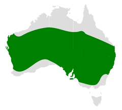 Cheramoeca leucosterna distribution map.png