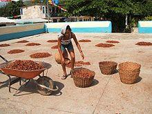 Semi di cacao essiccati al sole.