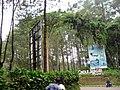 Cikole Jayagiri Resort - panoramio.jpg