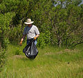 Cleaning in the cordgrass (8914101549) (2).jpg