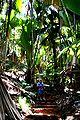 Cocodemerforest.jpg