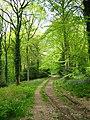 Coed Beddick - geograph.org.uk - 1286844.jpg