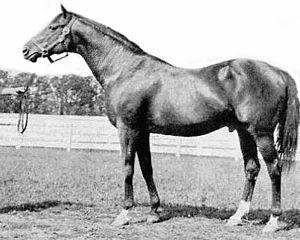 Colin (horse) - Image: Colin (1905)