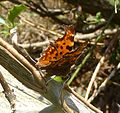 Comma showing 'c' - Flickr - gailhampshire.jpg
