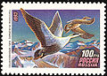 Common eider russian stamp.jpg