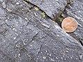 Conococheague Formation - Oolites (4802156030).jpg