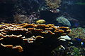 Coral reef... South end of my area (14122854664).jpg