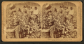 Cotton is king - A plantation scene, Georgia, from Robert N. Dennis collection of stereoscopic views 3.png