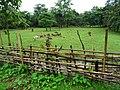 Cows in Vang Vieng.jpg