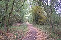 Crab and Winkle Way Cycle Path towards Canterbury - geograph.org.uk - 1522233.jpg