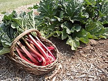 Crimson Red Rhubarb.JPG