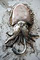 Cuttlefish (4606635568).jpg