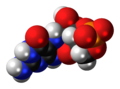 Cyclic pyranopterin monophosphate anion spacefill.png
