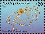 Cyrtomaia ericina 2008 stamp of the Philippines.jpg