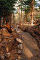 Czerniawa Zdrój - ścieżka rowerowa - panoramio.jpg
