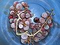 Déclie des raisins gelés - panoramio.jpg