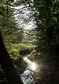 Dülmen, Naturschutzgebiet -Franzosenbach- -- 2014 -- 0182.jpg