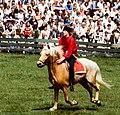 Dülmen, Wildpferdefang 1982 -- 2010 -- 4.jpg