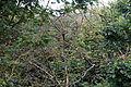 Dead branches Woodland Trust wood Theydon Bois Essex England 02.JPG