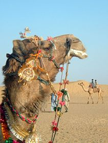 Decorated Camel.jpg