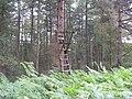 Deer shooting platform - geograph.org.uk - 549379.jpg