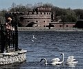 Der Dohna and swans - panoramio.jpg
