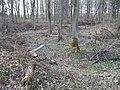 Deutergraben im Hochwald Talmulde.jpg