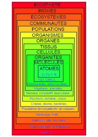 File Diagramme de l anisation biologiquepng  Wikimedia Commons
