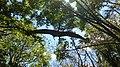 Dinopark, Funtana, Croatia (dinopark.hr) - panoramio (19).jpg