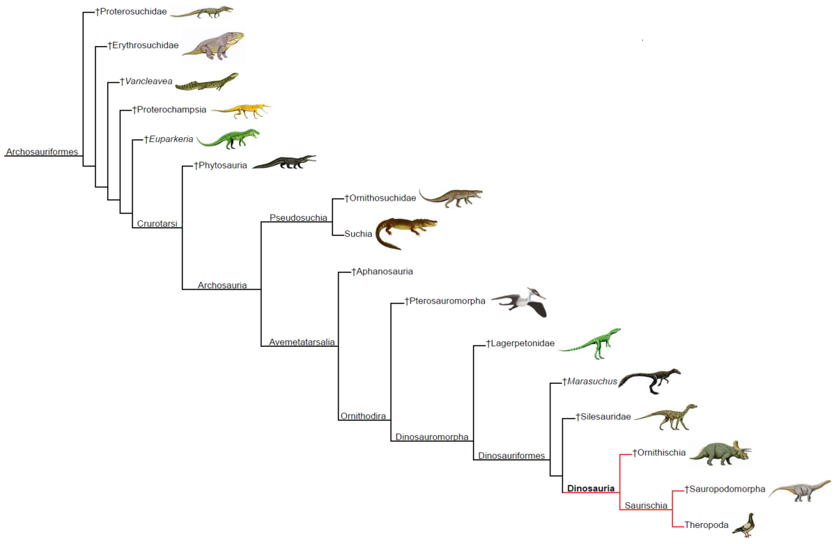 Dinosauria phylogeny (within Archosauriformes).png