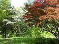 Dogwood-Japanese Maple 072.jpg