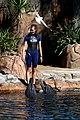 Dolphin Cove 05.jpg