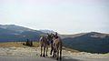 Donkeys (7).jpg