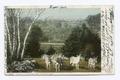 Donkeys in Berkshire Park, Pittsfield, Mass (NYPL b12647398-68624).tiff