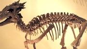 File:Dracorex pan body.ogv