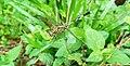 Dragonfly on the leaf closeup.jpg
